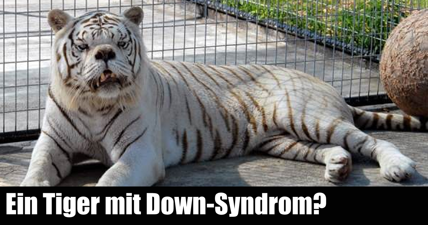 Löwe Down Syndrom